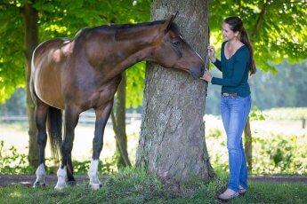 Links und rechts neben einem Baum stehen Pferd und Reiterin und blicken sich an