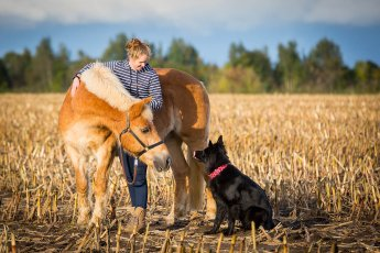 Pferd, Hund und Reiterin im warmen Abendlicht