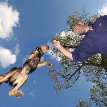Dynamische Hundefotos – Im richtigen Moment auf den Auslöser gedrückt: Terrier springt nach dem Leckerli seines Herrchens