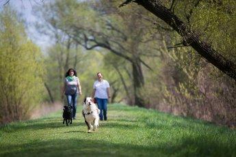 Zwei Hunde beim Gassi gehen mit Offenblende fotografiert