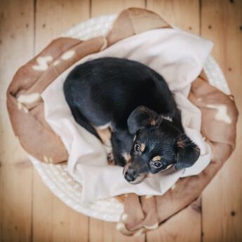 Beim Hundeshooting in Hamburg entstanden: Junger Hund im Körbchen aus der Vogelperspektive