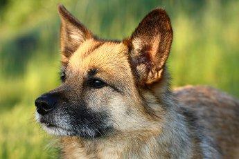 Outdoor-Hundefotografie in bestem Licht