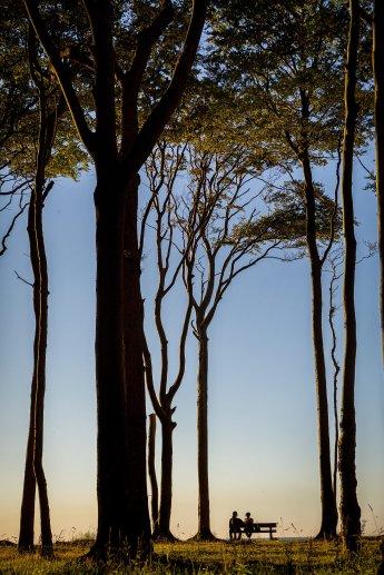 Paar auf einer Bank im Sonnenuntergang, umgeben von riesigen Bäumen