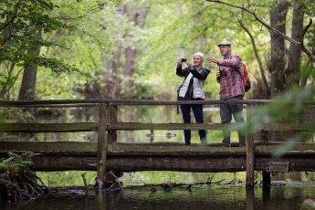 Touristen auf einem Steg über einen Flusslauf im Wald