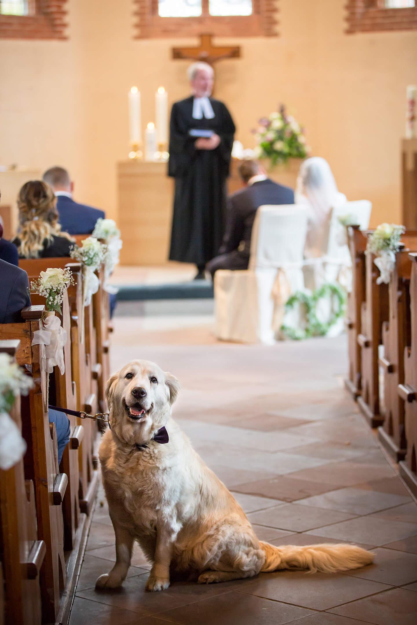 Hund bei einer Trauung in der St Paulus Kirche in Buchholz