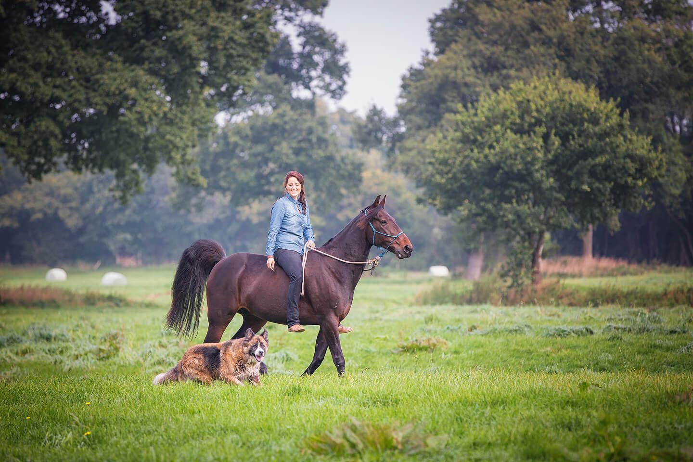 Pferde-Fotoshooting mit Hund auf einer Koppel im Frühherbst