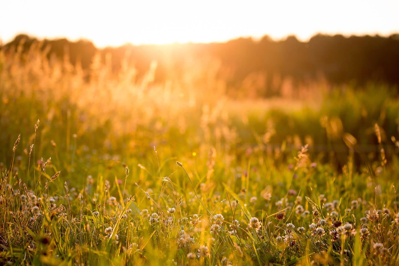 Naturwiese im Licht der untergehenden Sonne