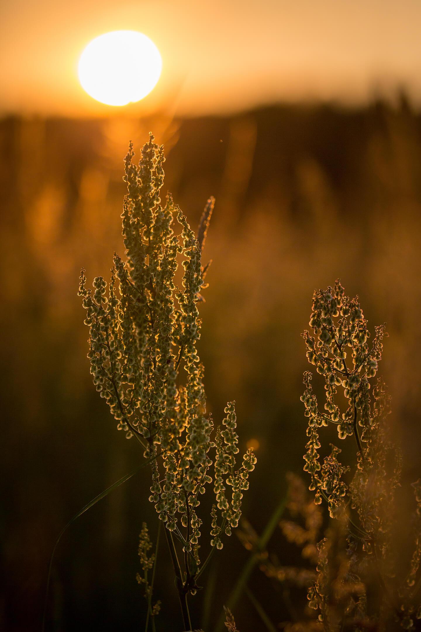 Detailaufnahme im Licht des Sonnenuntergangs