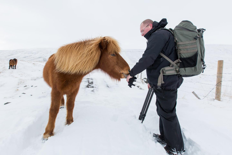 Islandpferd auf Tuchfühlung mit dem Fotograf Holger Kröger