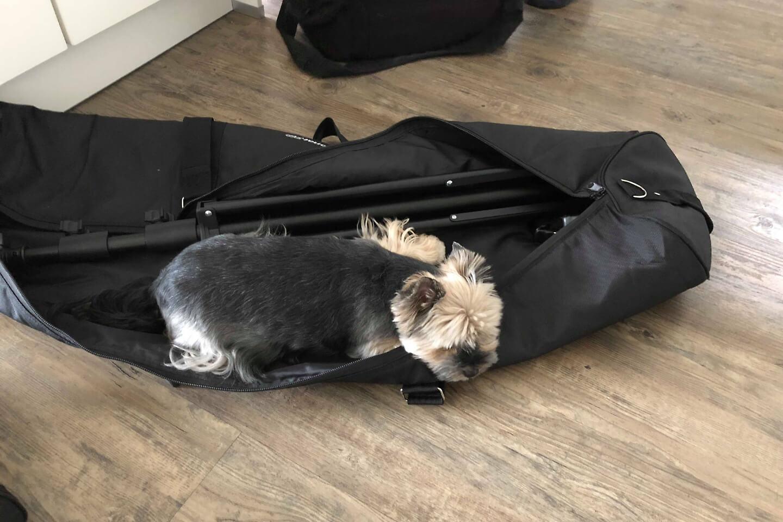 Der Hund macht es sich beim Shooting für Portraitfotos in der Fototasche gemütlich