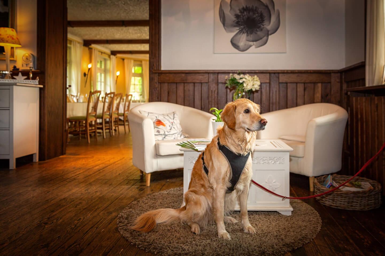 Wachhund in der Hochzeitslocation Strandhus Grossensee