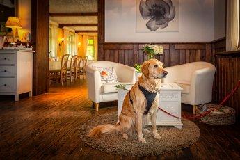 Im Restaurant Strandhus am Großensee passte dieser Hund während einer Hochzeitsreportage am Tresen auf