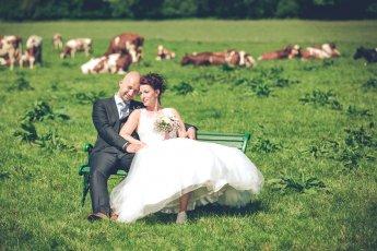 Ländliches Hochzeitsfoto auf der Weide mit Kühen im Hintergrund