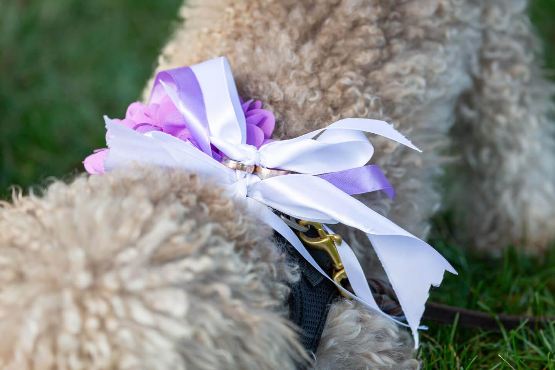 Trauringe am Halsband vom Hund