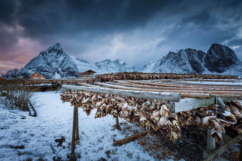 Lofoten fotografieren im Winter - Trockenfisch gehört dazu