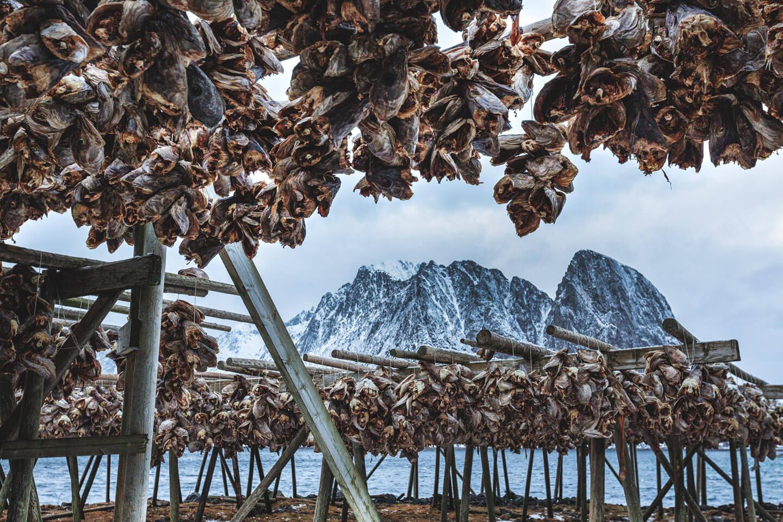 Trockenfisch auf den Lofoten