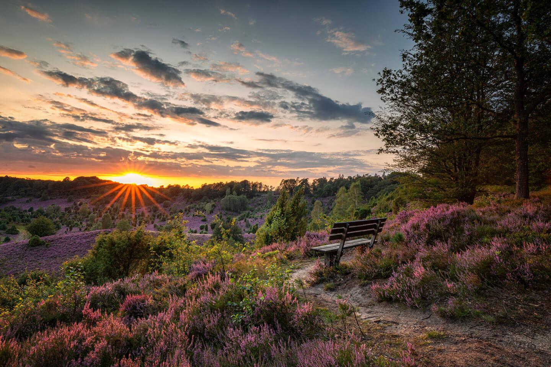 Sitzbank in der Lüneburger Heide zum Sonnenuntergang