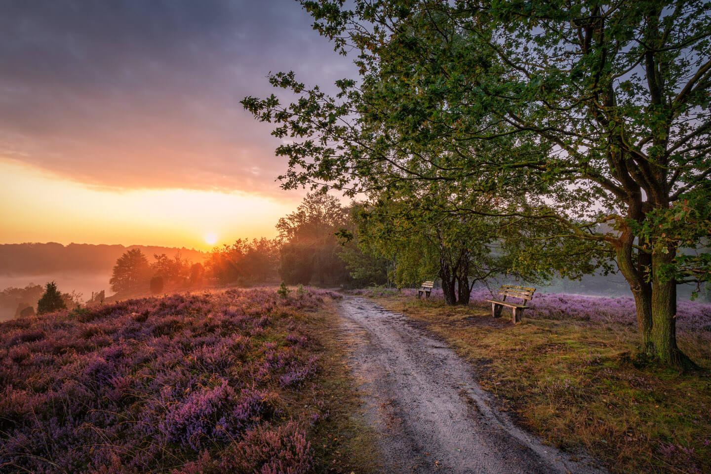 Heide fotografieren zum Sonnenaufgang