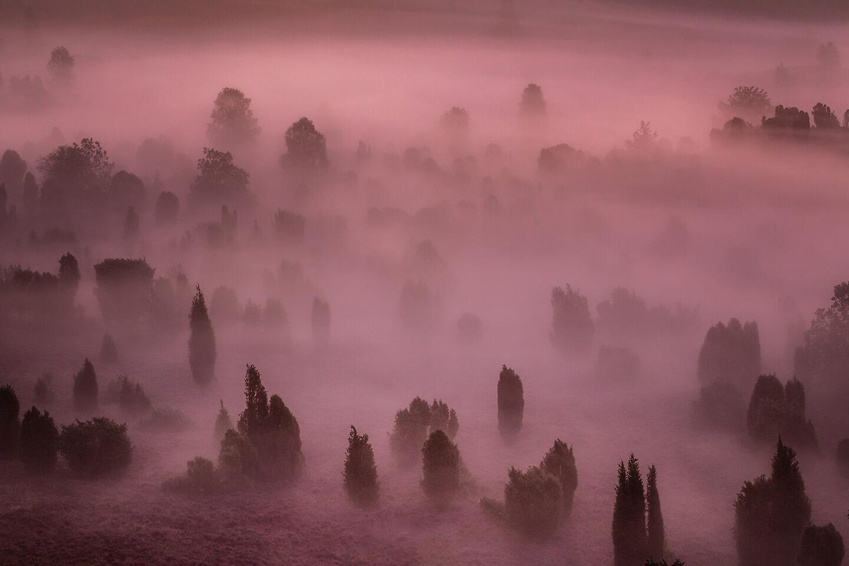 Heidelandschaft im Morgennebel