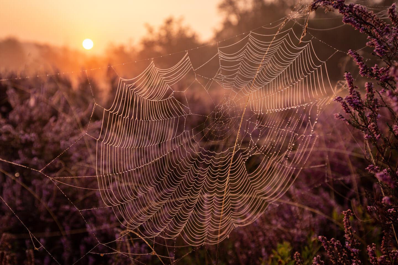 Spinnennetz im warmen Licht der aufgehenden Sonne