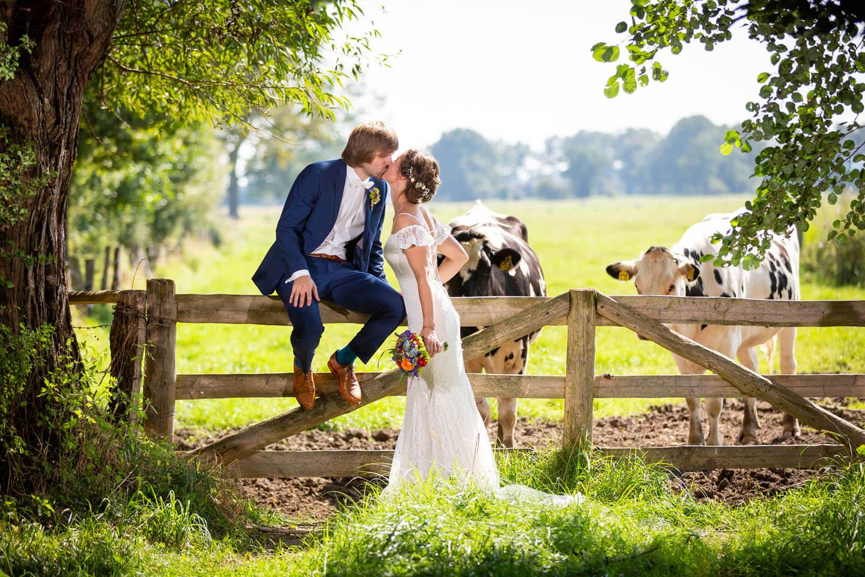 Hochzeitsfotos mit Kühen