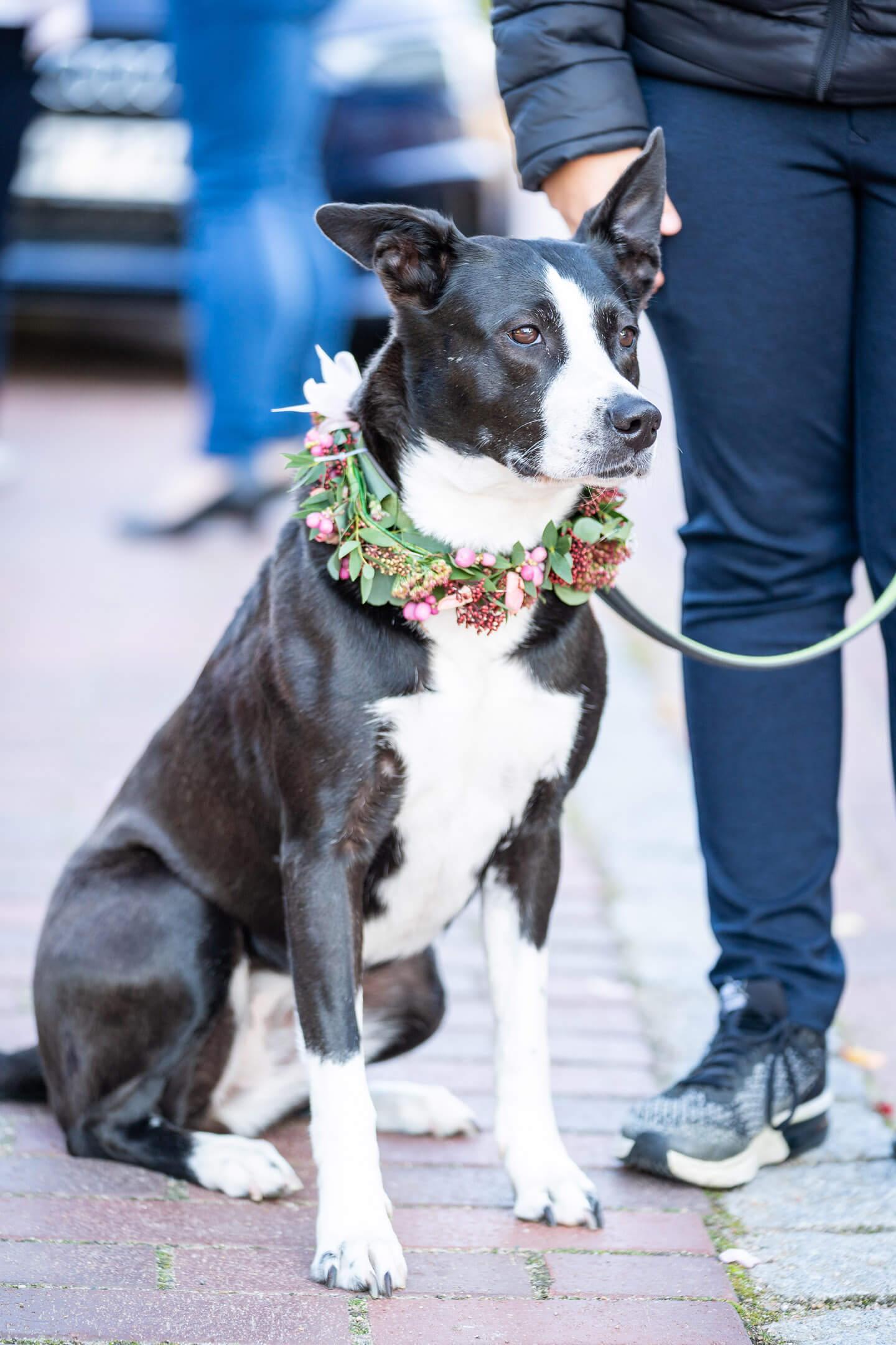 Hund vom Hochzeitspaar