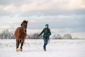 pferdefotografie_winter