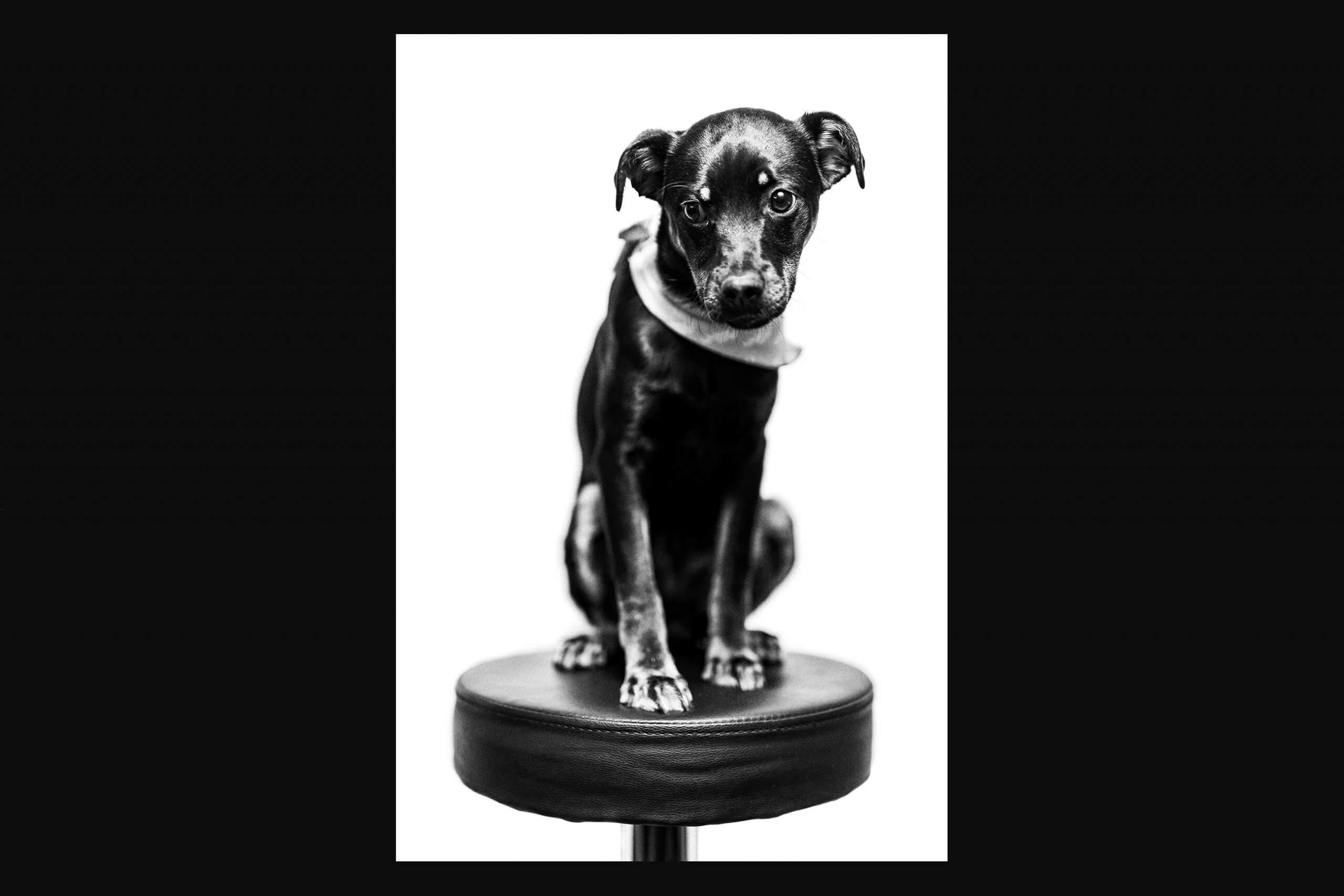 Hunde_Portrait Schwarzweiß