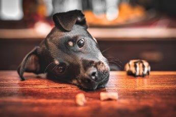 Natürliche Hundefotos vom Profi aus Hamburg