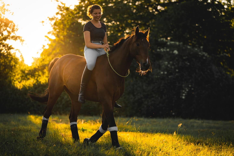 Pferde-Fotoshooting im letzten Sonnenlicht